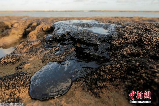 【蜗牛棋牌】巴西海岸原油污染影响大 已扩散至座头鲸保护区