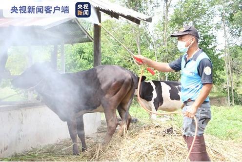 【蜗牛棋牌】泰国暴发牛疫 数千头牛被感染